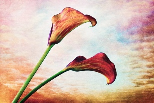 "Finished work ""Two Callas"" with masked in background textures."
