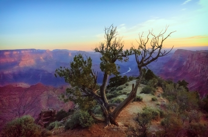 Grand Canyon with Tree