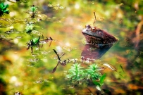Life's a Pond