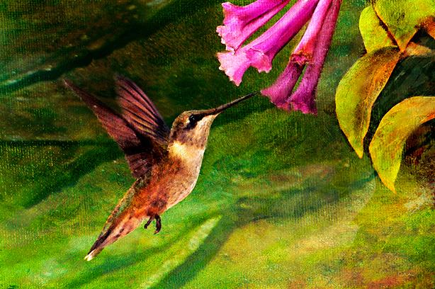 hummingbird-skeeze_cfxtex3fltexsigcfxtrp copy
