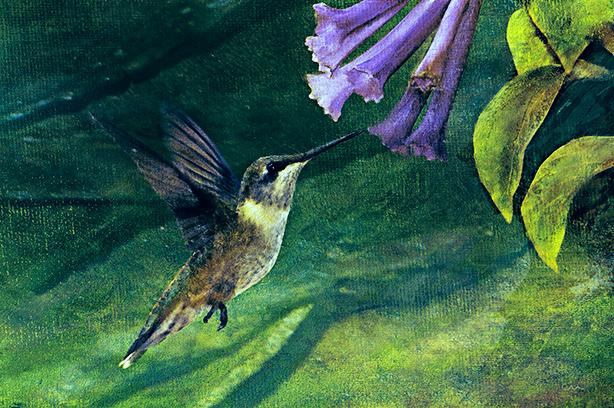 hummingbird-skeeze_cfxtex3fltexsigcfxtrptpres3