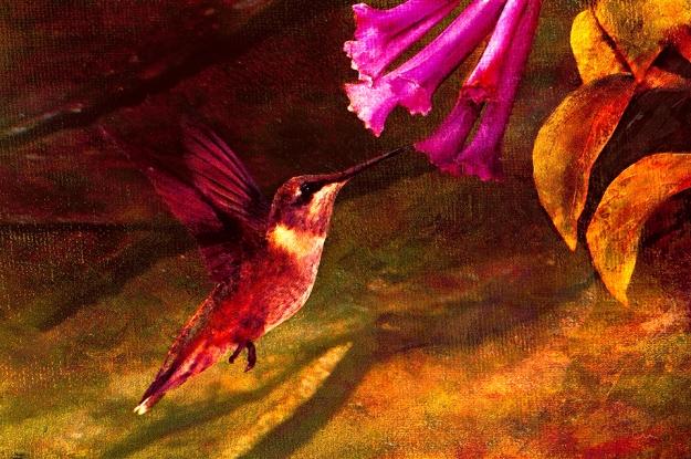 hummingbird-skeeze_cfxtex3fltexsigcfxtrptpres5 copy